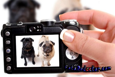 Фотографируем правильно собак