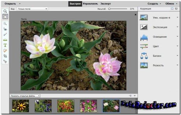 Adobe Photoshop Elements 2021 (RUS) v.19.0.0.331